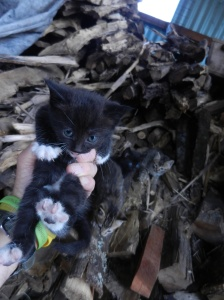 Kittens in the woodpile